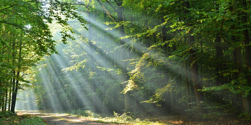 Light streaming through trees in a forest, illuminating a path